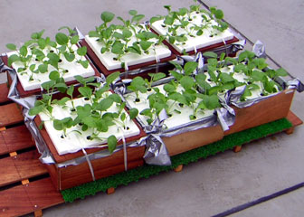 ROOF VEGETABLE GARDEN